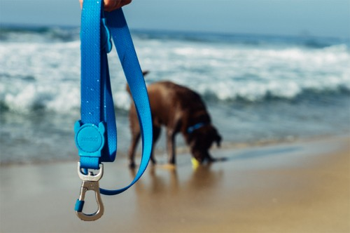 dog-leash-neopro-blue-zeedog-dk-let-dogs-be-dogs-miss-pets-lover.png